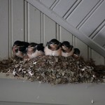The nest has a bunch of new inhabitants this year.